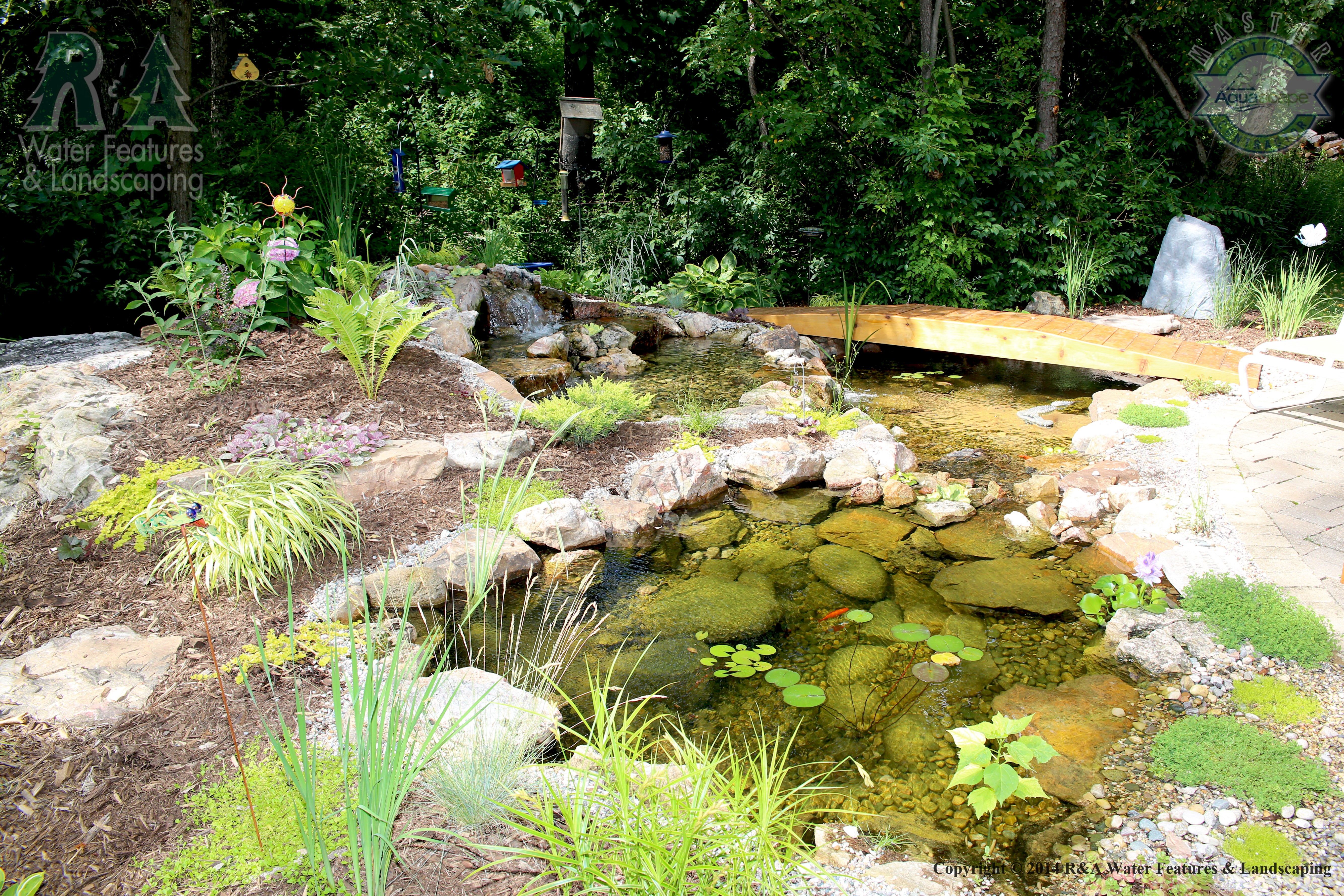 What is an ecosystem pond r a water features and for Garden pond ecosystem