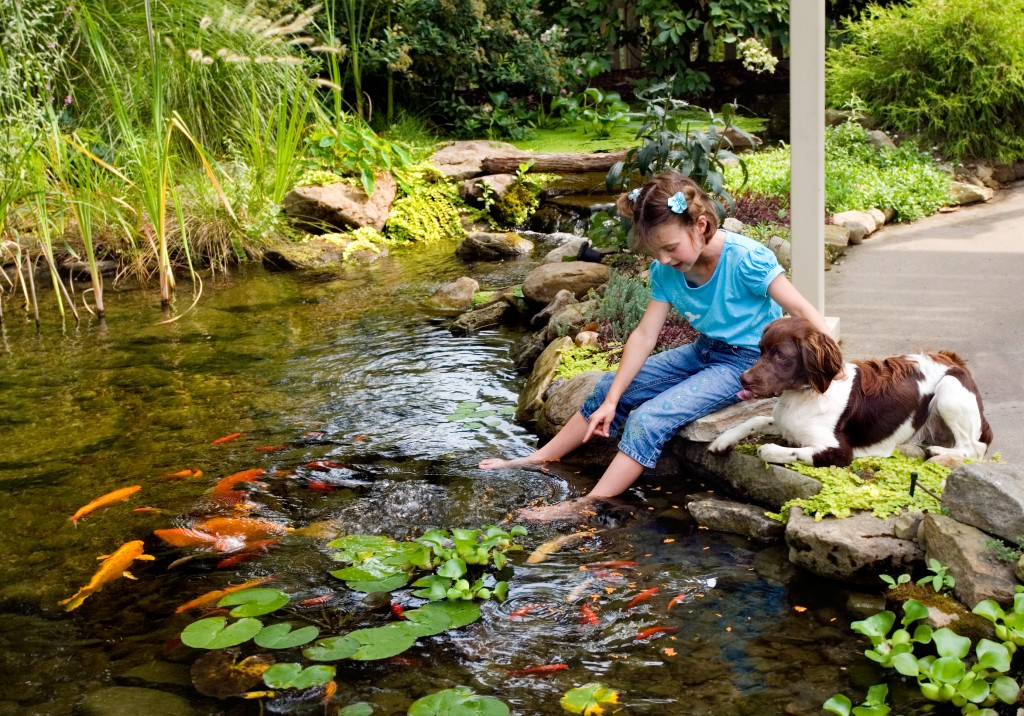 Common koi pond misconception it s not safe for my kids for Whats a koi pond