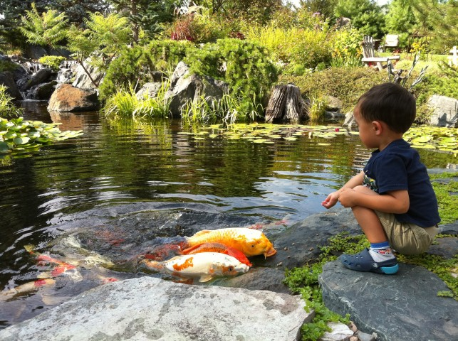 How to get your Grand Rapids pond ready for winter