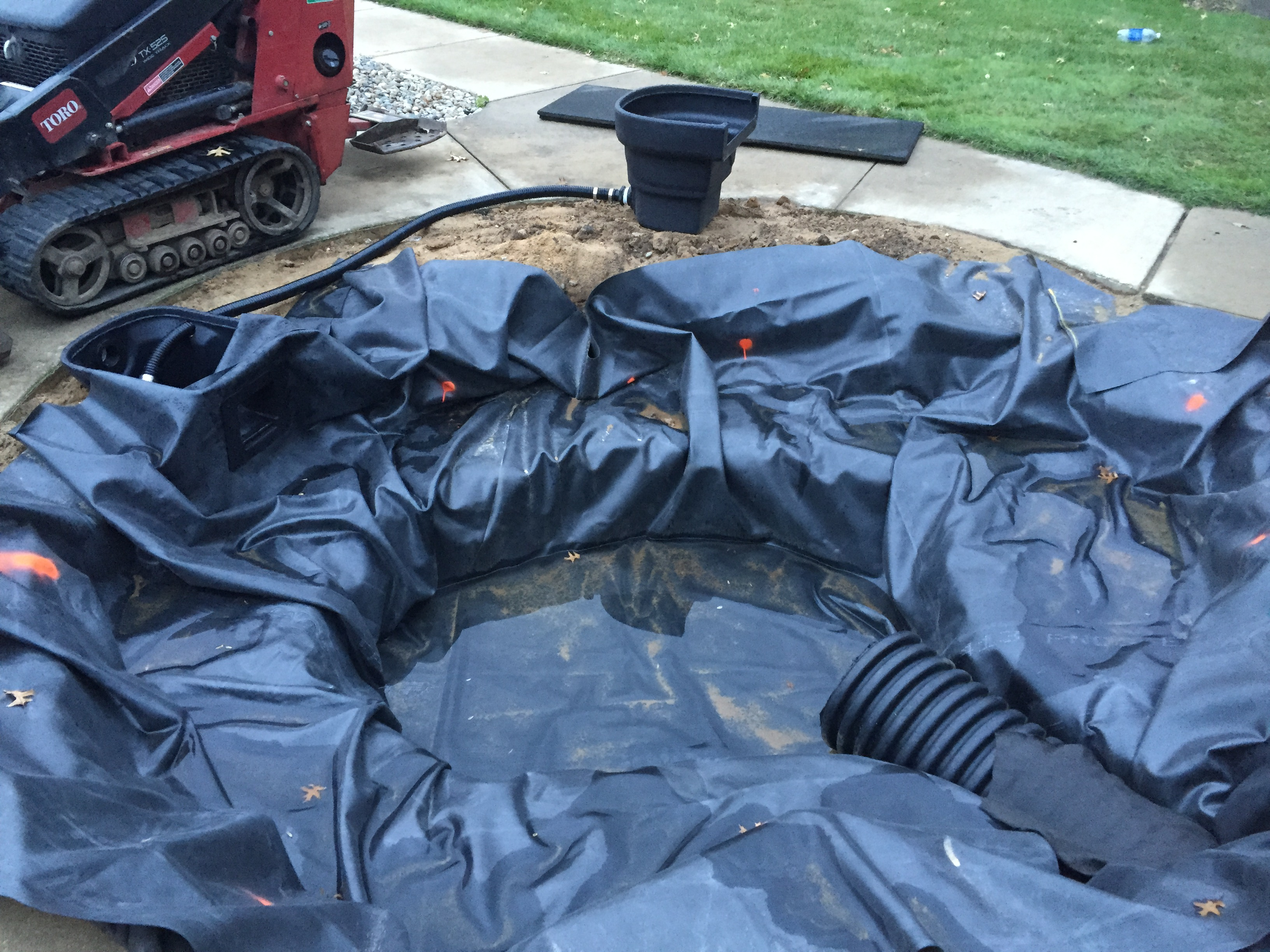 How to protect your koi fish from predators r a landscaping for Koi fish predators