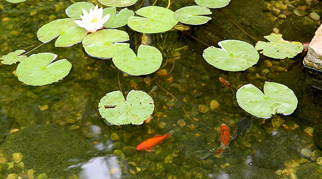 How deep are koi ponds r a landscaping for How deep should a koi pond be