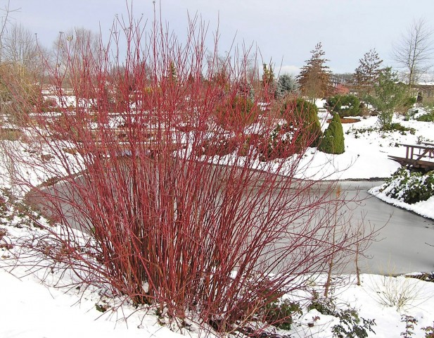 Winter Interest Plants