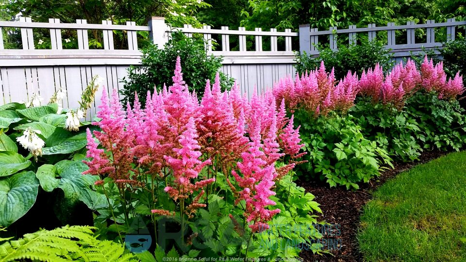 Landscape Water Feature Decorative Fountain Shade Garden Kalamazoo MI Astilbe