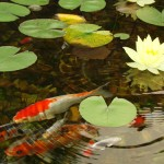 Do Chemicals Keep Pond Water Clean