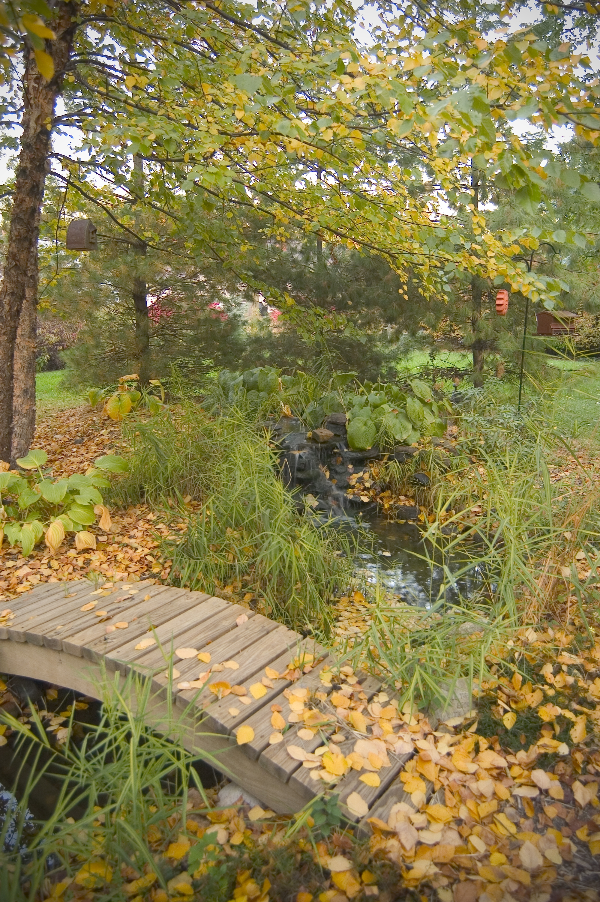 Fall and Your Pond - R&A Landscaping