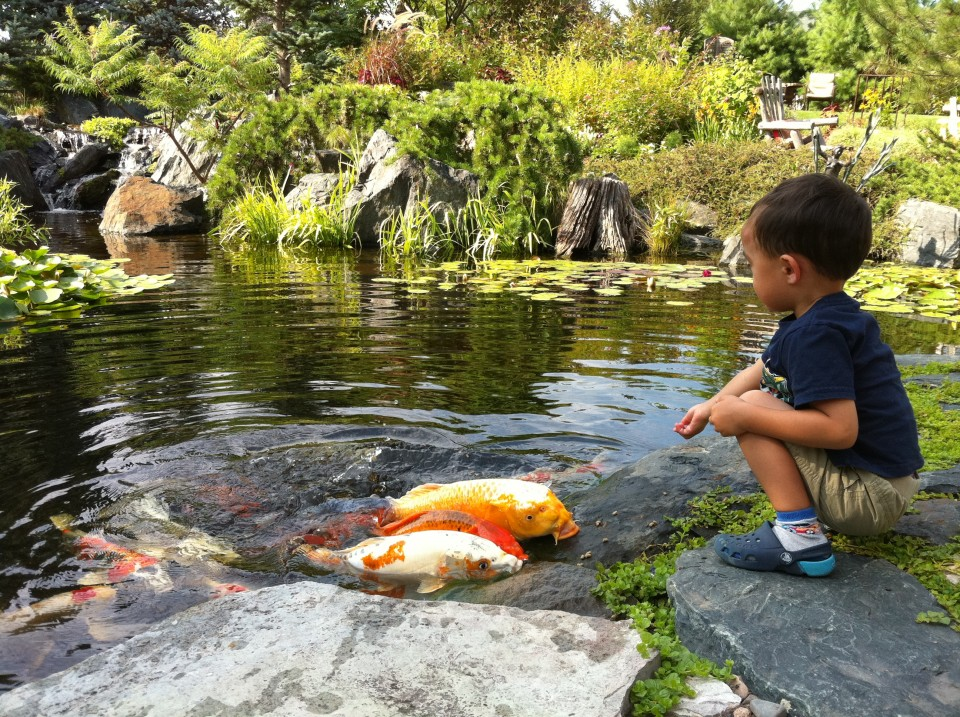 Large size pond with child feeding fish