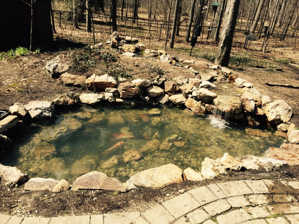 Pond Cleaning Grand Rapids