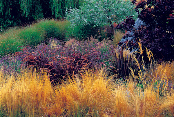 Native Plants for Sustainable Michigan Landscapes