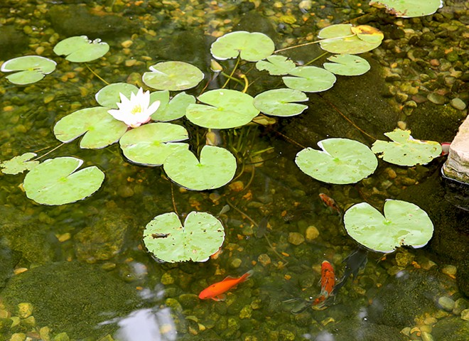 do i need to use chemicals to keep my pond water clean