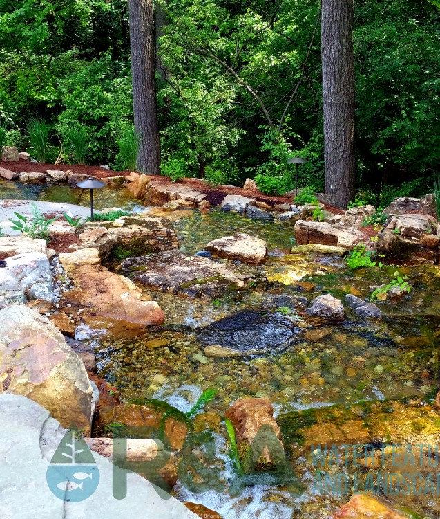 Pond cleaning tips Grand Rapids string algae