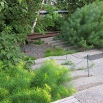 Low Maintenance Plants Sun Kalamazoo Amsonia
