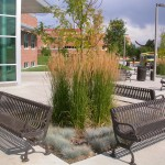 Low Maintenance Grass Kalamazoo Feather Reed Grass