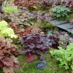 Low Maintenance Shade Plants Kalamazoo Coral Bells