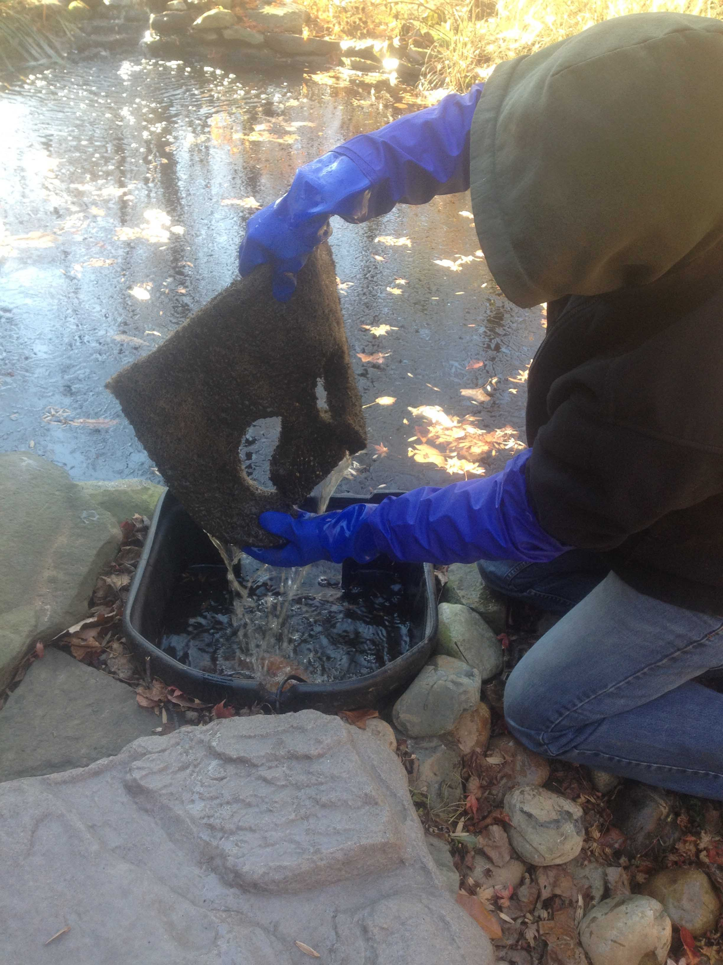 Pond skimmer being cleaned