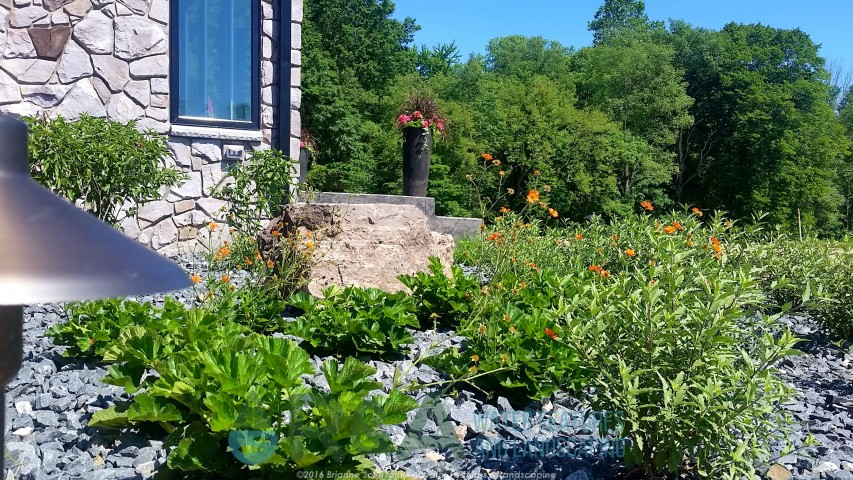 Michigan Native Plants Sustainable Landscape Kalamazoo