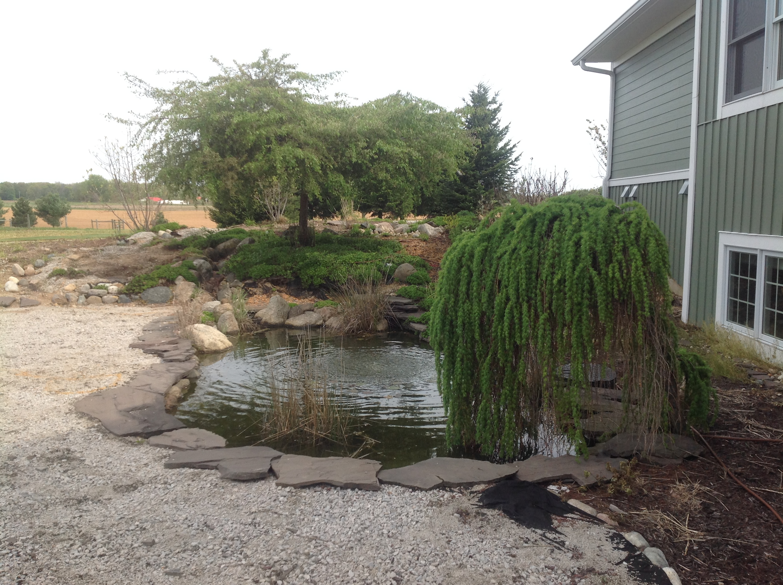 Southwest MI Koi Pond Installation Waterfall Water Feature Wetland Aquatic Plants 1