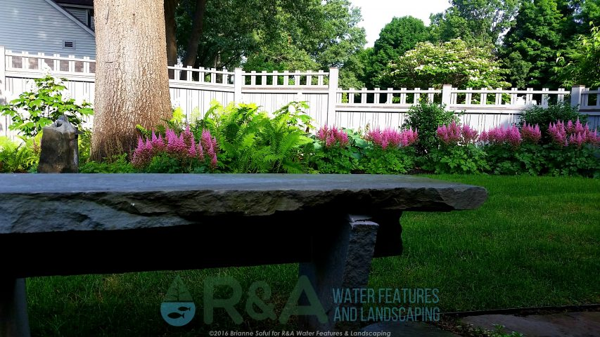 Native Plants Kalamazoo MI Ferns Landscape Design & Water Features